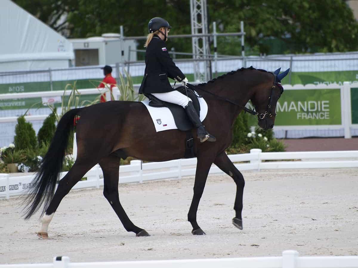 Reprezentatka v paradrezúre (foto na koni)